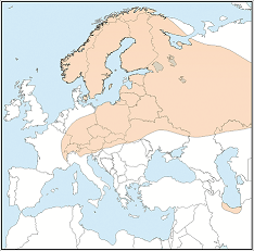 Distribution map of Eptesicus nilssonii