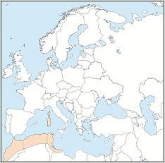 Distribution map of Myotis punicus