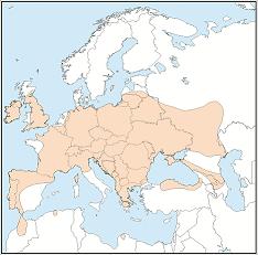 Distribution map of Nyctalus leisleri