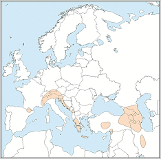 Distribution map of Plecotus macrobullaris