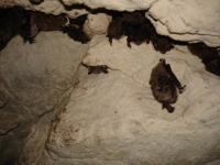 pond_bats_in_the_tanechkina_cave.jpg